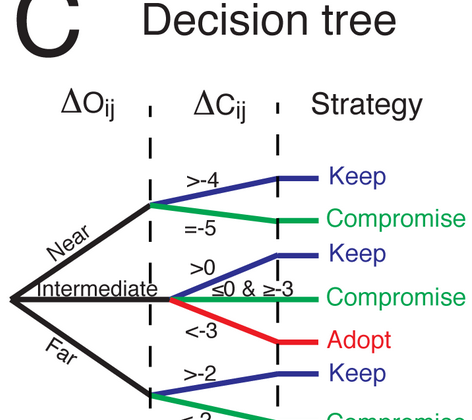 Decision tree that shows when people keep their opinon, compromise, or adopt another opinion